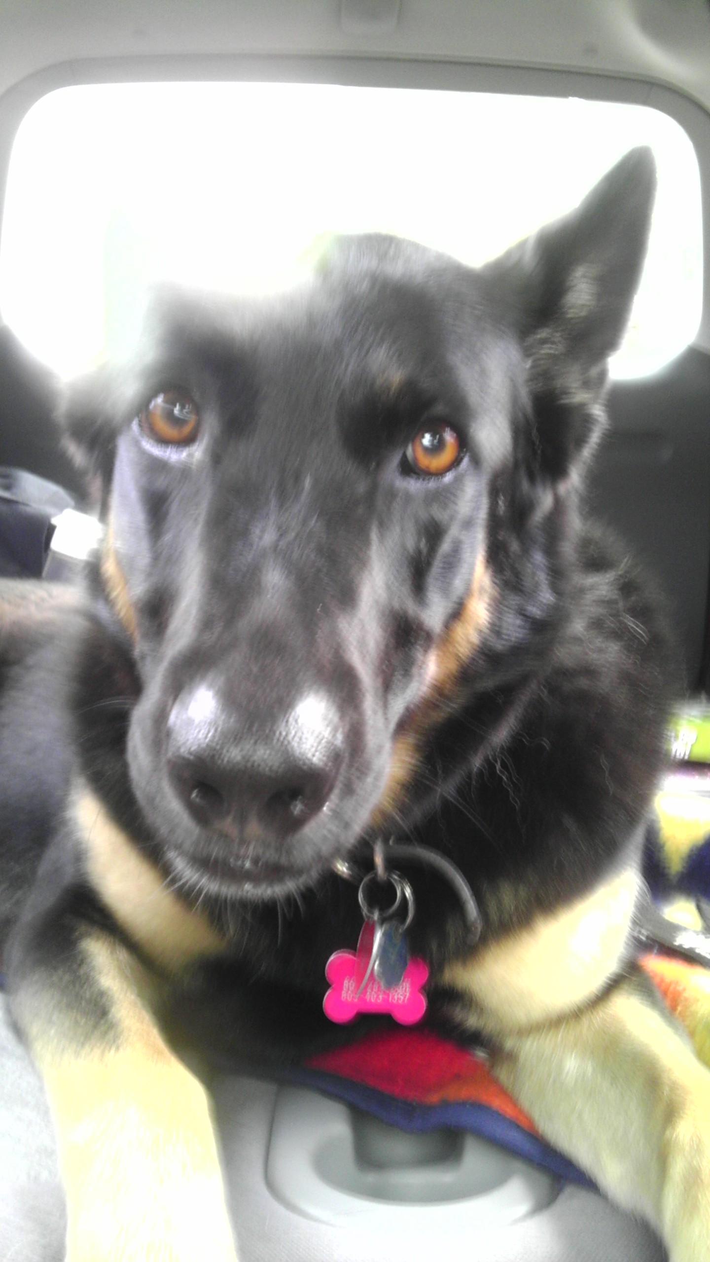Dog Knots Girl